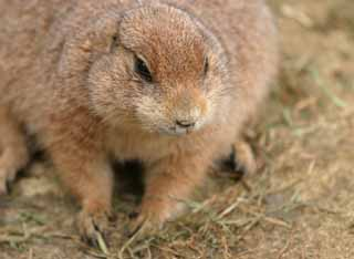 ����, ������������, ���������, ������, ����������, ���� �����.,whiskers prairie dog., ������, , ,