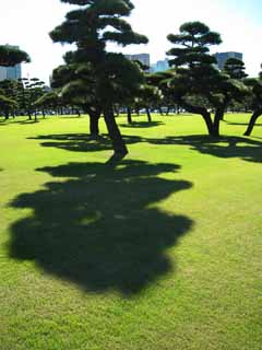 photo,material,free,landscape,picture,stock photo,Creative Commons,Edo-jo Castle, pine, , shadow, lawn