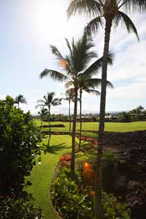 photo,material,free,landscape,picture,stock photo,Creative Commons,Mauna Lani, Lava, palm, Golf, southern country