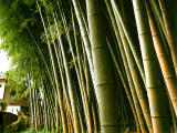photo,material,free,landscape,picture,stock photo,Creative Commons,Boundary of a bamboo grove, , , ,