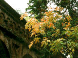 photo,material,free,landscape,picture,stock photo,Creative Commons,Brick conduit and yellow leaves, autumn leaves, , ,