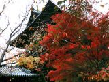 photo,material,free,landscape,picture,stock photo,Creative Commons,Gate of Nanzenji Temple, autumn leaves, , ,