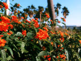 photo,material,free,landscape,picture,stock photo,Creative Commons,Tropical red flowers, red, , ,