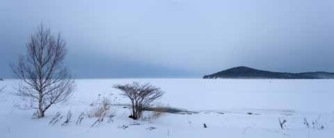 photo, la mati�re, libre, am�nage, d�crivez, photo de la r�serve,Hiver de lac Saroma, lac, Bouleau blanc, C'est neigeux, l'�tang fond
