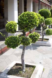 photo,material,free,landscape,picture,stock photo,Creative Commons,A garden plant of Wat Suthat, temple, bonsai, garden plant, Bangkok