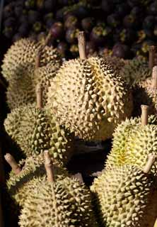 photo,material,free,landscape,picture,stock photo,Creative Commons,A durian, Fruit, , durian, smell