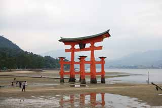 photo, la mati�re, libre, am�nage, d�crivez, photo de la r�serve,Otorii de temple Itsukushima-jinja, L'h�ritage culturel de Monde, Otorii, Temple shinto�ste, Je suis rouge du cinabre