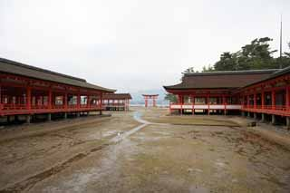 ����, ������������, ���������, ������, ����������, ���� �����.,������� shrine Itsukushima-������� Shrine, ������� ���������� ��������, ������� shrine, Shinto shrine, � cinnabar �������
