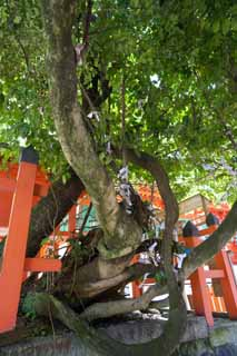 photo,material,free,landscape,picture,stock photo,Creative Commons,The parasitic plant of seven kinds of Kasuga Taisha Shrine, Shinto, Shinto shrine, child, Sterility