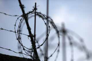 photo,material,free,landscape,picture,stock photo,Creative Commons,Refusal, Barbed wire, wall, morning glory, trumpet