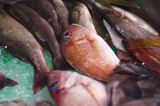 photo,material,free,landscape,picture,stock photo,Creative Commons,A fish shop, Thailand, sea bream, , fish shop