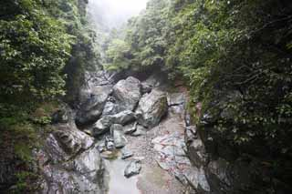 photo,material,free,landscape,picture,stock photo,Creative Commons,Rainy ravine, huge stone, river, forest, Ravine