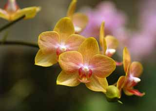 ����, ������������, ���������, ������, ����������, ���� �����.,������ orchid, orchid, , orchid, Gardening