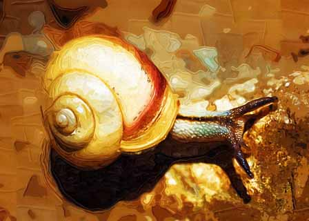 illust, mati�re, libre, paysage, image, le tableau, crayon de la couleur, colorie, en tirant,Un escargot, escargot, escargot, conque, escargot
