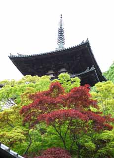 photo, la mati�re, libre, am�nage, d�crivez, photo de la r�serve,Trois plis de tours de temple Taima, Feuilles color�es, B�timent japonais, tour triple, Architecture du Bouddhisme