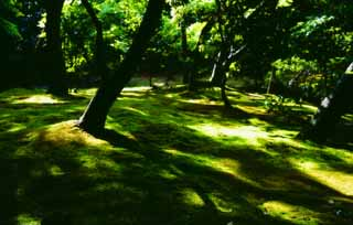 photo, la mati�re, libre, am�nage, d�crivez, photo de la r�serve,Lumi�re du soleil � travers garde vert 2, Ginkakuji, mousse, arbre,