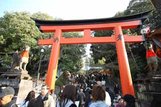 photo, la mati�re, libre, am�nage, d�crivez, photo de la r�serve,Fushimi-Inari Taisha torii de Temple, La visite de nouvelle ann�e � un temple shinto�ste, torii, Inari, renard