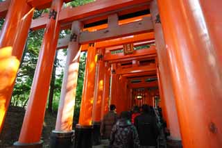 photo, la mati�re, libre, am�nage, d�crivez, photo de la r�serve,1,000 Fushimi-Inari Taisha toriis de Temple, La visite de nouvelle ann�e � un temple shinto�ste, torii, Inari, renard