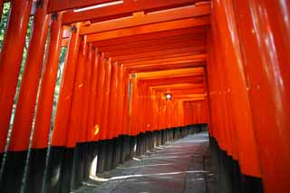 ����, ������������, ���������, ������, ����������, ���� �����.,1.000 Fushimi-����� Taisha Shrine toriis, ����� ��������� ���� � Shinto shrine, torii, �����, ����