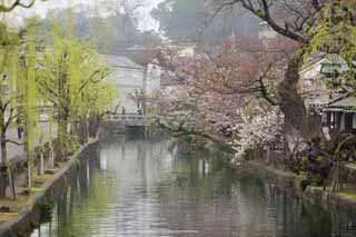 photo, la mati�re, libre, am�nage, d�crivez, photo de la r�serve,Kurashiki Kurashiki rivi�re, Culture traditionnelle, arbre de la cerise, Japonais fait une culture, L'histoire