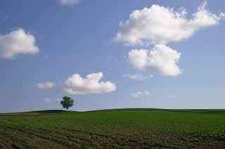 photo, la mati�re, libre, am�nage, d�crivez, photo de la r�serve,Regarder le terrain agricole, arbre, nuage, ciel bleu, champ