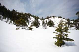 photo, la mati�re, libre, am�nage, d�crivez, photo de la r�serve,Kusatsu Mt. Shirane champ neigeux, arbre, ciel bleu, haute montagne, Forme d'un arbre
